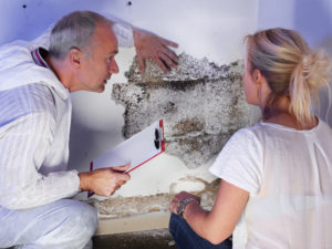 A mold remediation technician shows a homeowner mold that has grown unnoticed behind the paint on a basement wall.